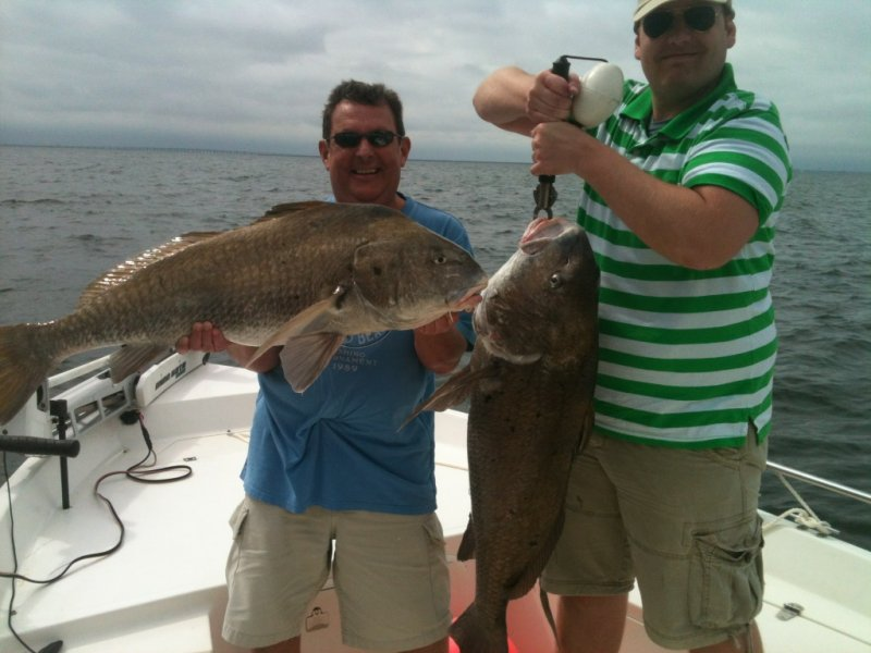 Tampa bay fishing charter gallery for Fish species in florida